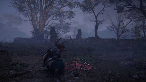 Assassin's Creed Valhalla Fly Agaric locations